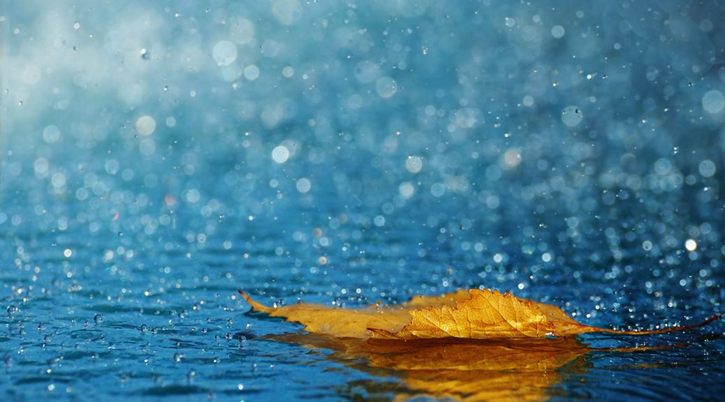 leaf_drops_rain_autumn_water_background