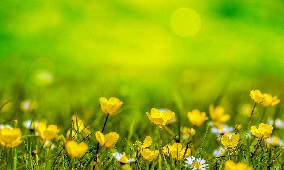 spring-316535_960_720