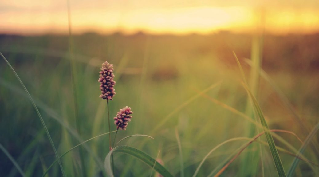 grass-field-sunset-wallpaper