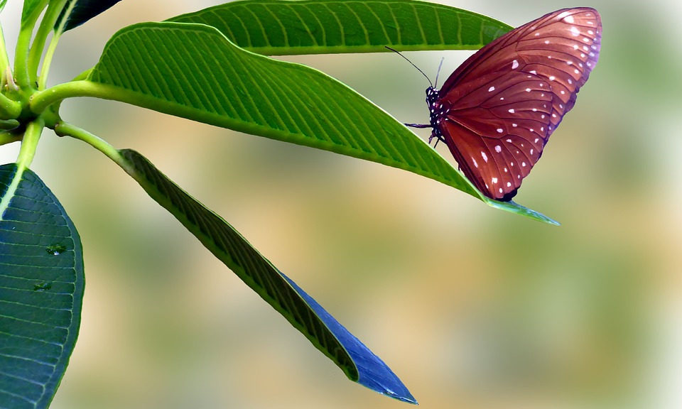 butterfly-1359500_960_720