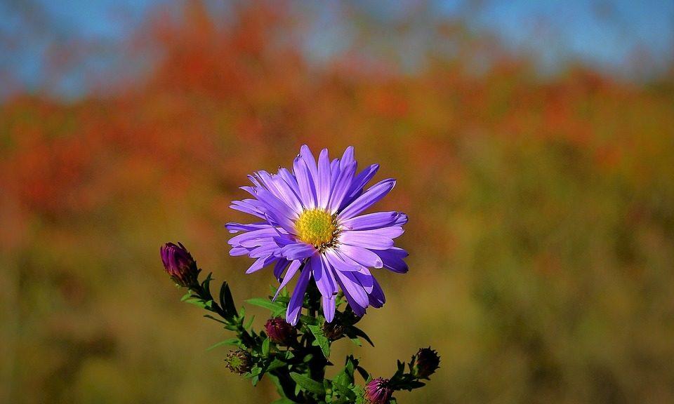 flower-3738387_960_720 - Copia
