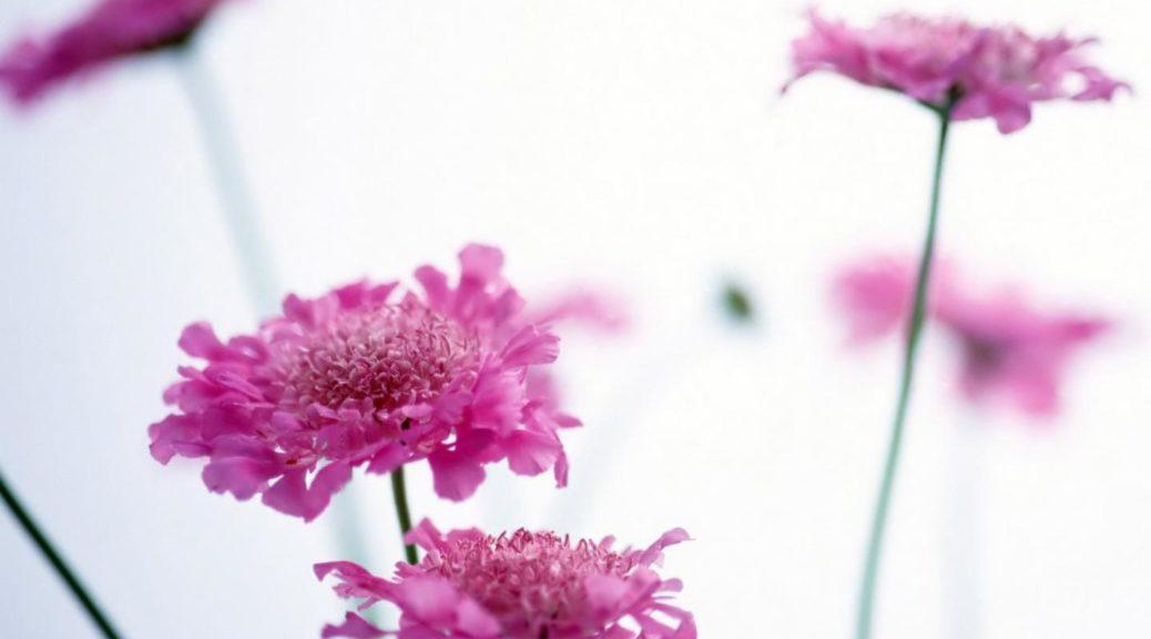 fiori_lilla_359