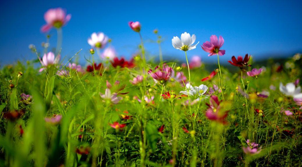 campo-di-fiori-primaverile