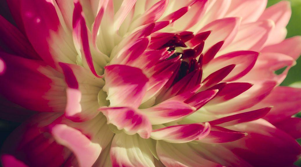 flower-224499_1280